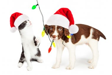 puppy and kitten playing with Christmas lights