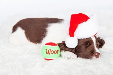 Christmas Puppy Sleeping With Ball