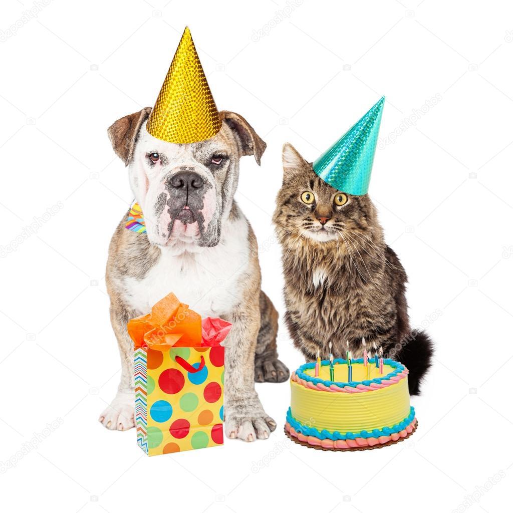 Geburtstag Partei Katz Und Hund Stockfoto C Adogslifephoto 93763846