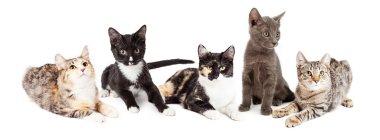 five adorable little kittens