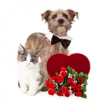 Dog and Kitten With Valentines Heart