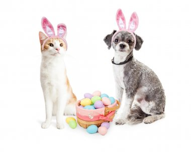 dog and cat with Easter basket of eggs