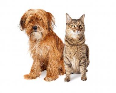 Shaggy Dog and Tabby Cat