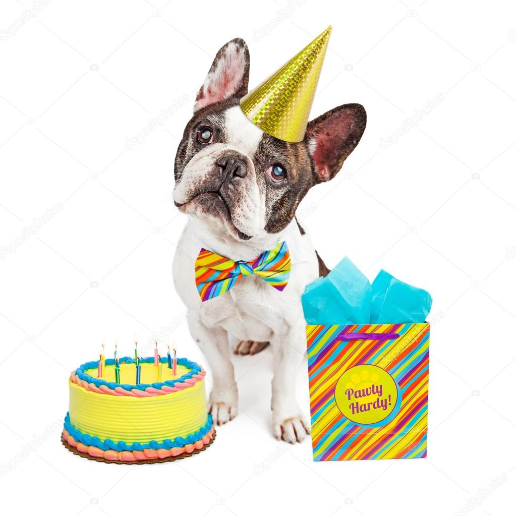 Funny French Bulldog Breed Dog Wearing Happy Birthday Hat And Bow Tie With Cake Present Photo By