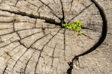 Leadership success and hope concept.Strong seed growing on old c