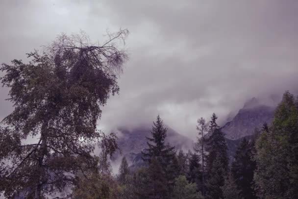 Timelapse video zamlžené zasněné krajiny. Hluboké mlhavá horská Les na podzim