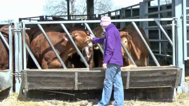Žena a dobytka