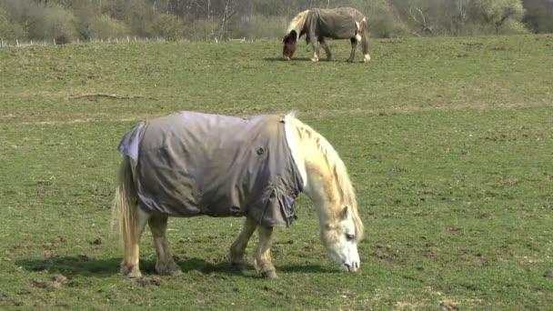 Pferde weiden
