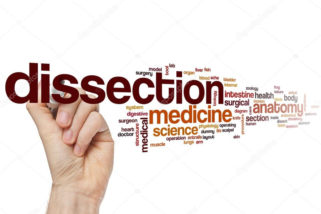 Dissection word cloud — Stock Photo © ibreakstock #105201424