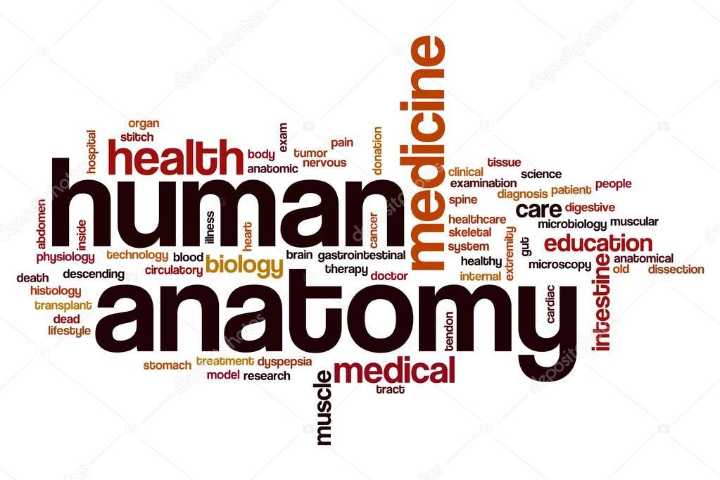 Human anatomy word cloud — Stock Photo © ibreakstock #121582034