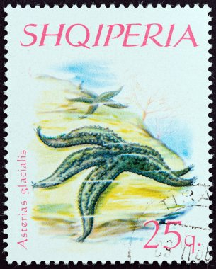 ALBANIA - CIRCA 1966: A stamp printed in Albania from the