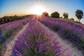 Fényképek Provence-levendula mező a naplemente, Valensole fennsík területe Dél-Franciaország