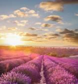 Levandulová pole proti barevný západ slunce v Provence, Francie