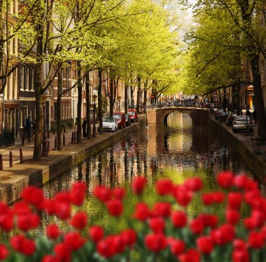 Amsterdam city with red tulips against canal in Holland