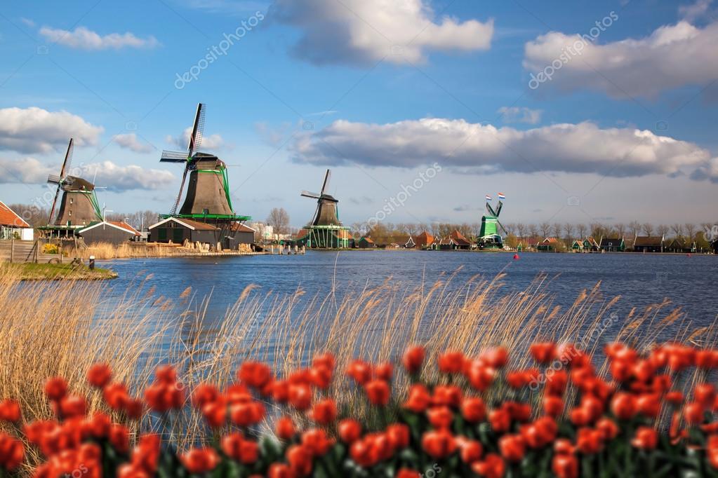 moinhos de vento holands com tulipas vermelhas perto de amsterdam holanda u fotografia de stock