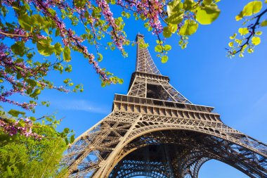 Eiffel Tower with spring tree in Paris, France