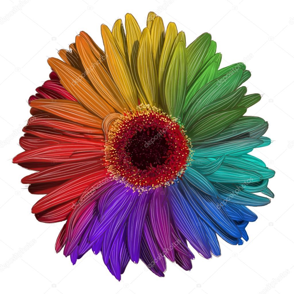 Drawing of colorful gerbera flower