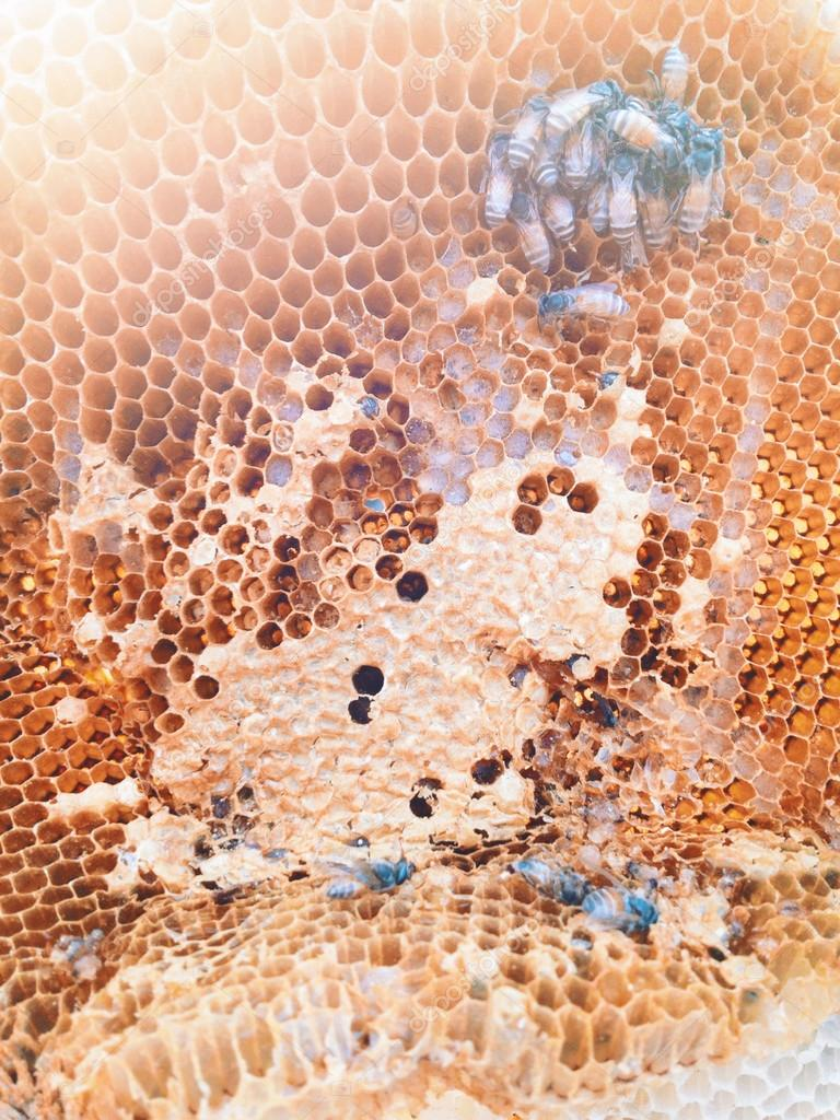 Bees inside the hive close up