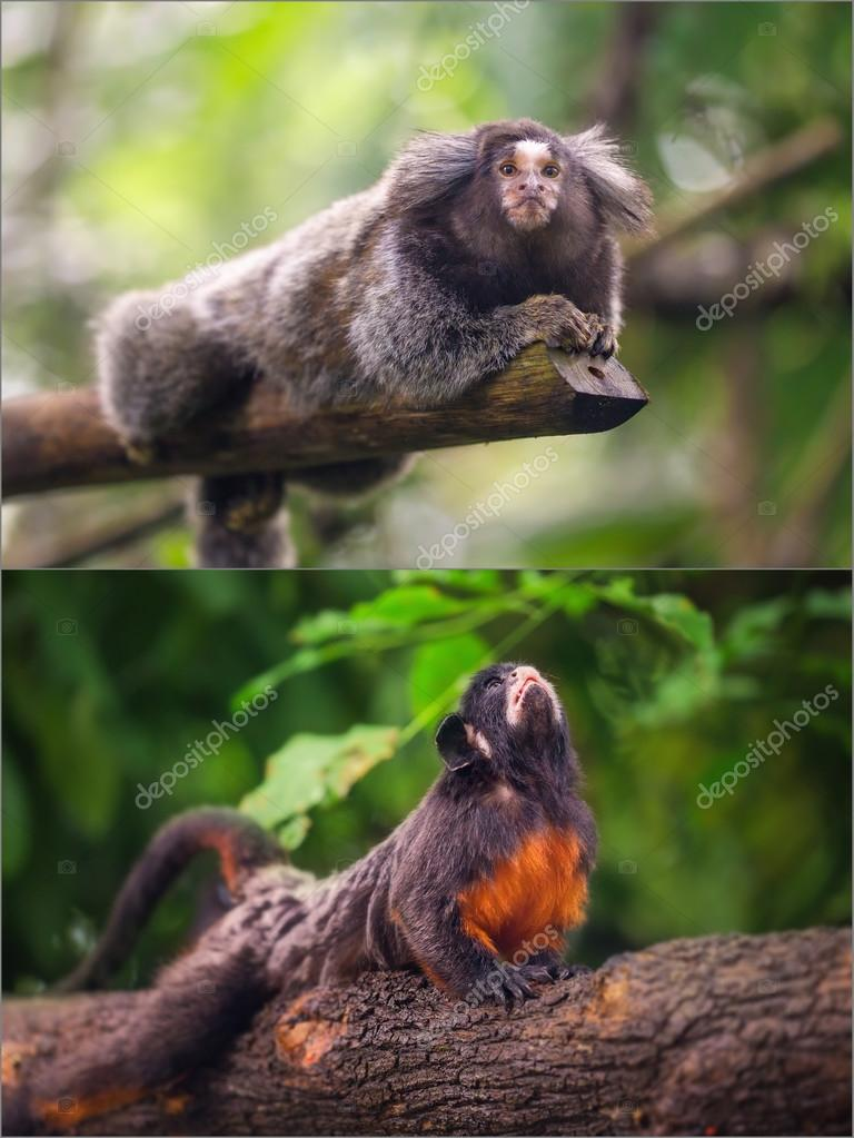 Collage of small monkeys sitting on a tree.