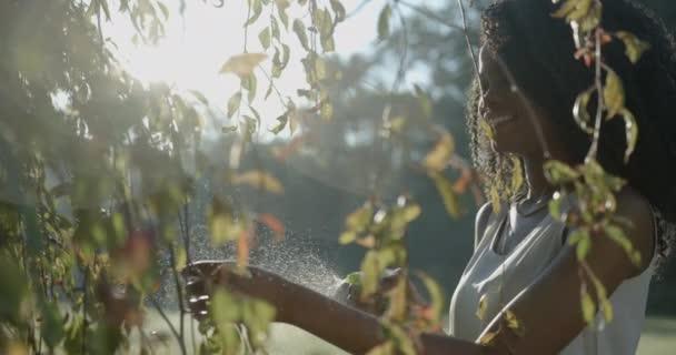 Usmívající se afro-americká dívka s přirozeným make-upem se stará o venkovní rostliny pomocí zelené plastové spouště pod pozadím slunečních paprsků. 4k, zpomalený pohyb.