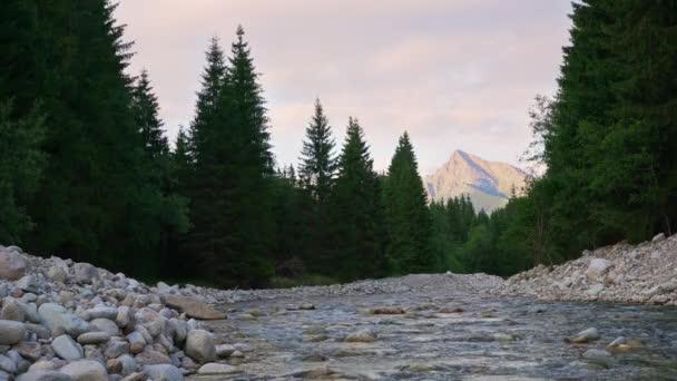 Mělká řeka Bela tekoucí lesem v letním odpoledni, jehličnany na obou březích, vrchol Kriváň (slovenský symbol) ve vzdálenosti