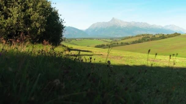 Odpolední sluncem zalitá louka s malým lesem. hora Kriváň (slovenský symbol) ve vzdálenosti - panning video přes klidnou krajinu