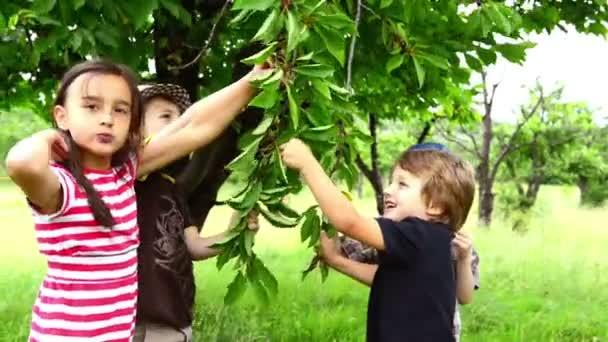 Children eating cherries from the tree