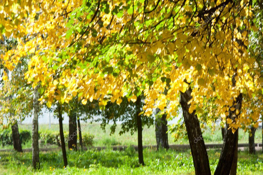 Гауссово Пятно Осень Парке Липа Падает Листья Желтые ...