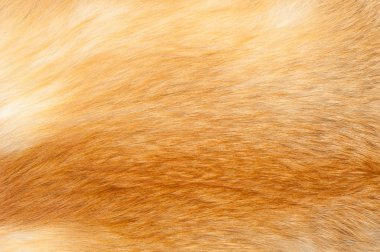 Textures red fox fur