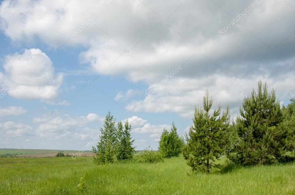 Summer pine birch great landscape