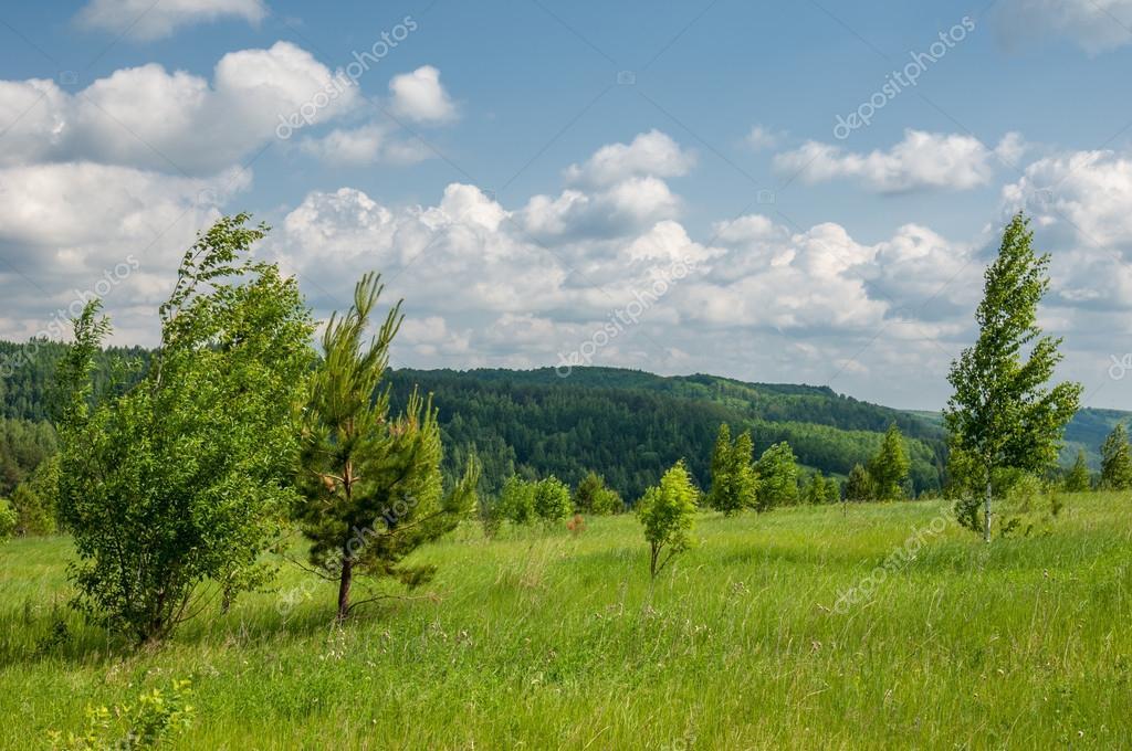 Summer pine birch great landscape