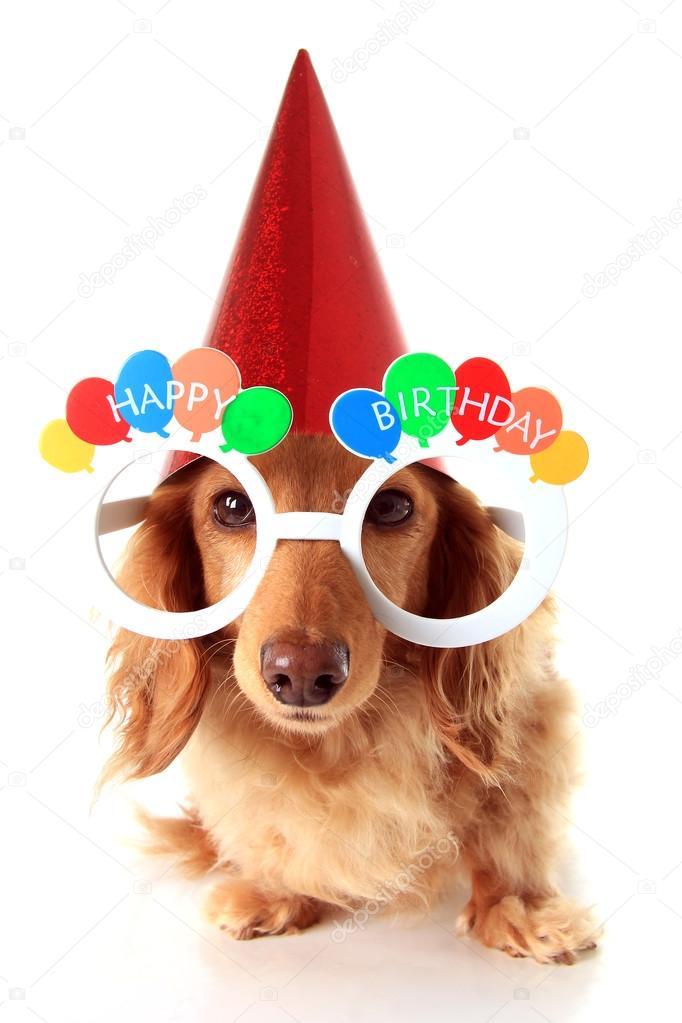 Gelukkige Verjaardag Hond Stockfoto 169 Hannamariah 88014336