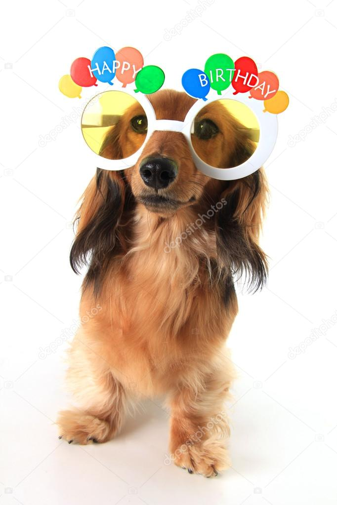 Happy Birthday Dackel Stockfoto C Hannamariah 88014368