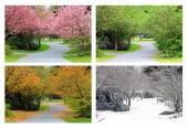Fotografie Vier Jahreszeiten in derselben Straße.