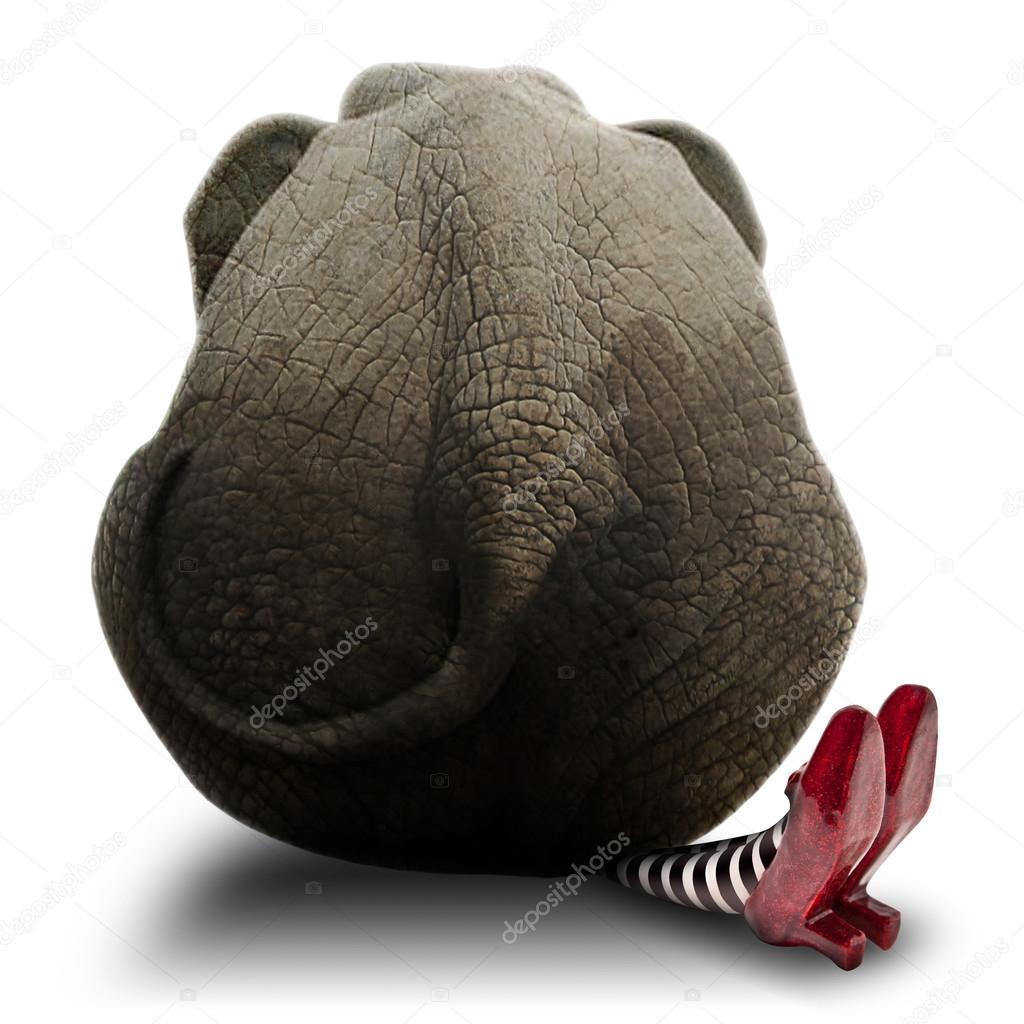Elephant sitting on Wicket Witch