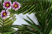 prázdná bílá papírová karta mezi větvemi s listy a květy, zblízka
