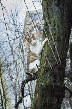 Scared cat hanging from the bark of a tree