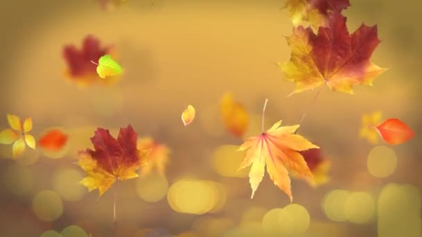 Autumn Leaves Loop Background