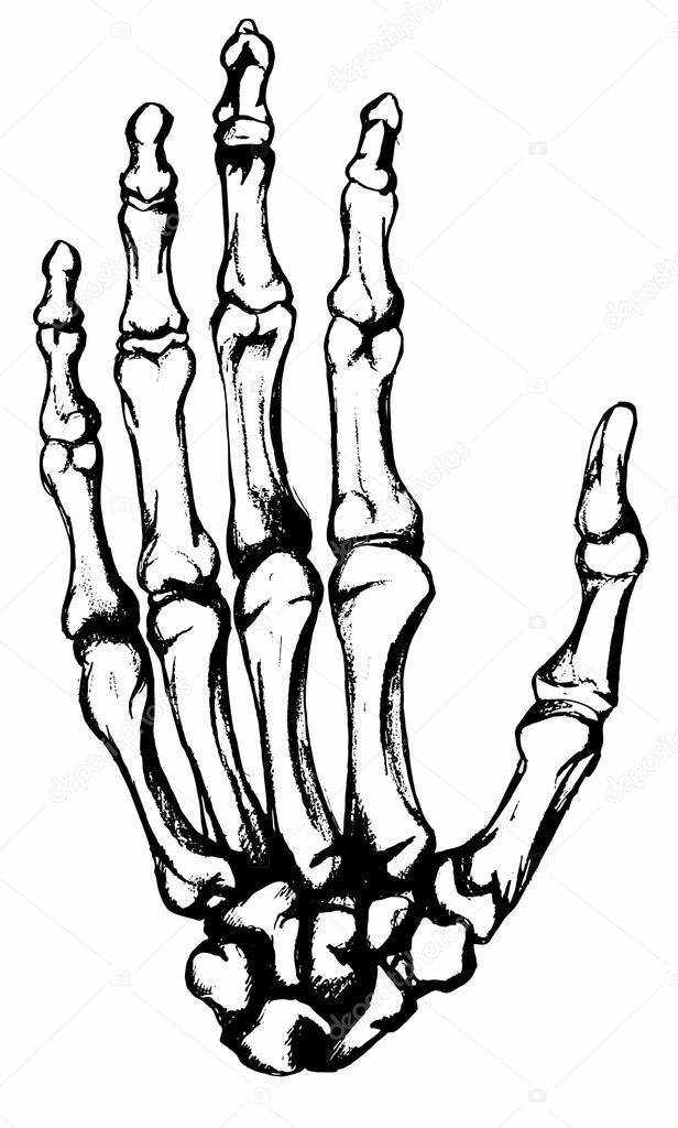 huesos de la mano dibujada a mano — Archivo Imágenes Vectoriales ...