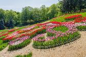 Fotografia Tulipani multicolore nel parco