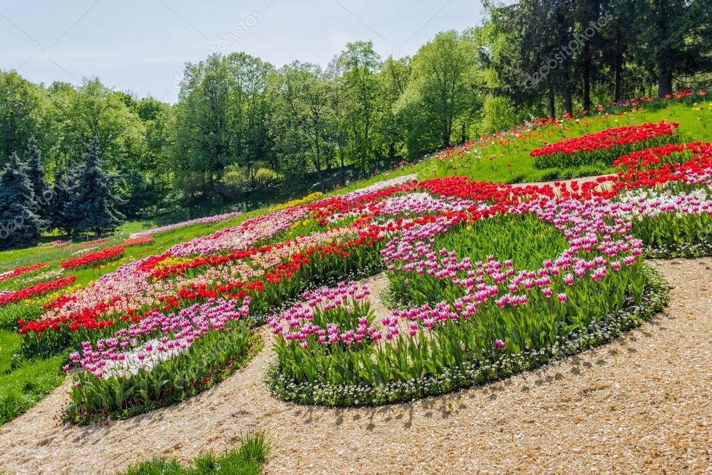 Multicolored tulips in the park