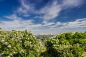 Fotografia giardino lilla