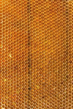 Honeycombs filled with honey closeup