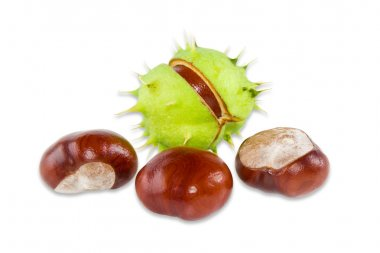 Several conkers on a light background