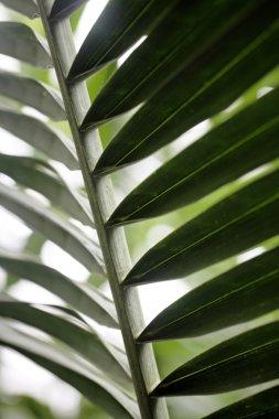 Close up of wild palm leaf