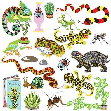 set terrarium animals
