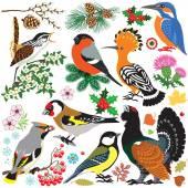 Fényképek Készlet-ból madarak