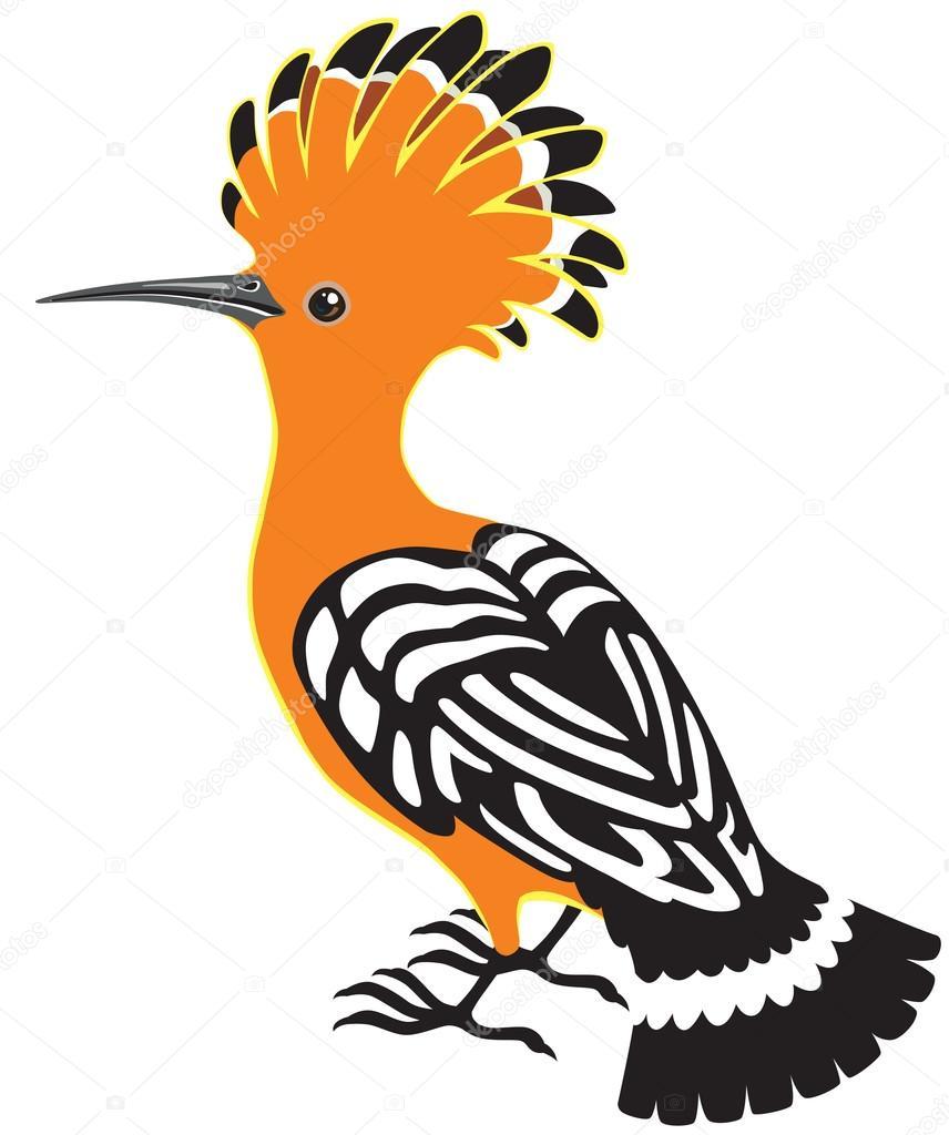 common hoopoe bird � stock vector 169 insima 93535618