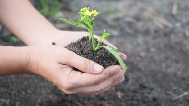 Woman hand hold planting growing a tree in soil on the garden. Female plant small young tree by hand in the morning. Forestry environments ecology, Earth Day and New Life concept