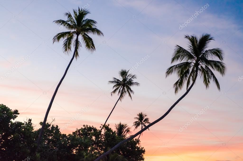 Фотообои Тропический закат в Муреа, Французская Полинезия